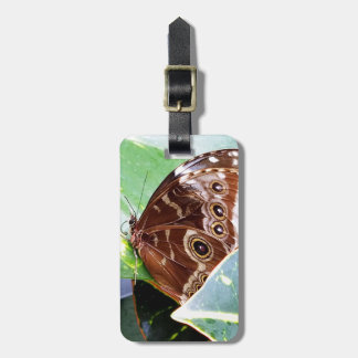 pretty eye butterfly moth brown tan picture bug luggage tag