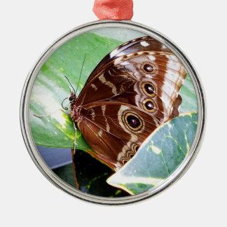 pretty eye butterfly moth brown tan picture bug metal ornament
