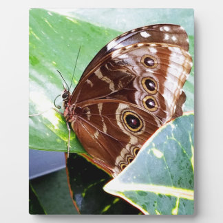 pretty eye butterfly moth brown tan picture bug plaque