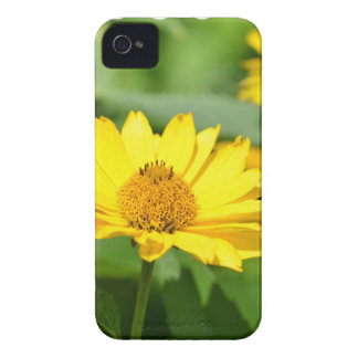 Pretty False Sunflower iPhone 4 Covers