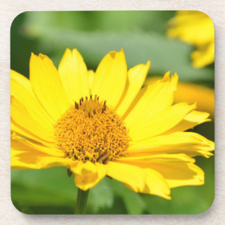 Pretty False Sunflower Drink Coaster