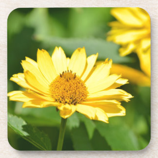 Pretty False Sunflower Beverage Coaster