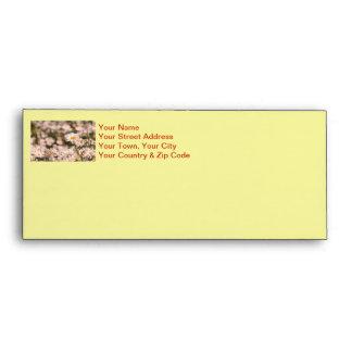 Pretty Field of Daisies Envelope