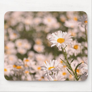 Pretty Field of Daisies Mouse Pad