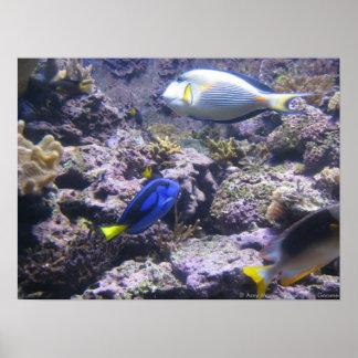 Pretty Fishies Poster