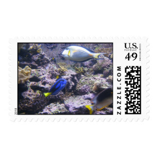 Pretty Fishies Stamps