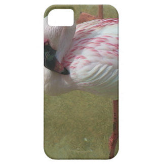 Pretty Flamingo iPhone SE/5/5s Case