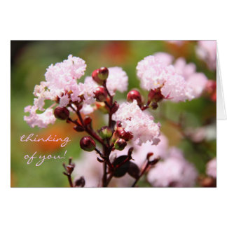 Pretty floral delicate pink blooms Thinking of you Card