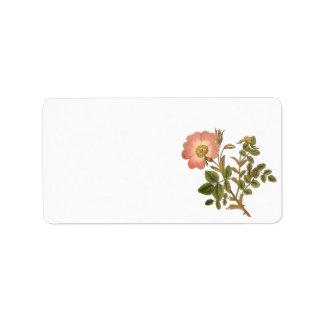 Pretty Floral Label - Pink Vintage Rose