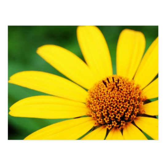 Pretty-flower-1303 YELLOW DAISY FLOWER SPRING GREE Postcard