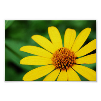 Pretty-flower-1303 YELLOW DAISY FLOWER SPRING GREE Poster