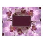 Pretty Flower Frame Postcard
