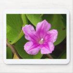 Pretty Flower Mousepads