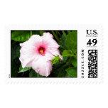 pretty flower postage stamp