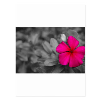 Pretty Flower Postcard