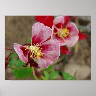 Pretty Flower print