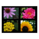 Pretty Flowers Collection Poster
