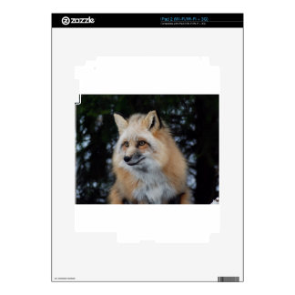 Pretty Fox Profile Decal For iPad 2