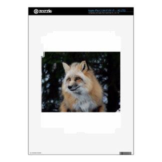 Pretty Fox Profile Skins For iPad 3