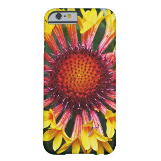 Pretty Gaillardia Barely There iPhone 6 Case