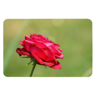 Pretty Garden Rose Rectangular Photo Magnet