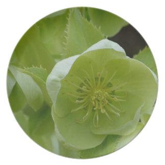Pretty Green Helleborus Party Plates