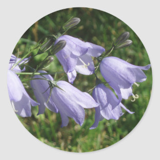 Pretty harebell flowers photo sticker