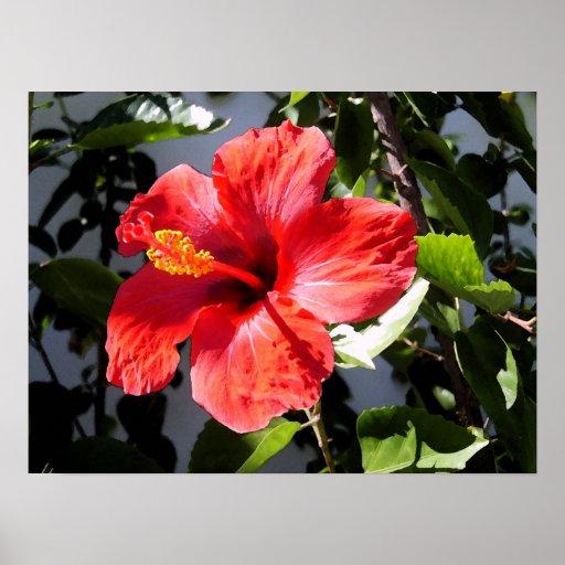 Pretty Hibiscus Poster