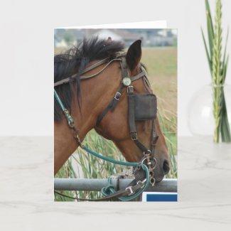 Pretty Horse card