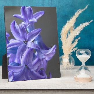 Pretty Hyacinth Plaques