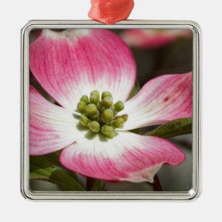 Pretty In Pink Dogwood Blossom Macro Metal Ornament