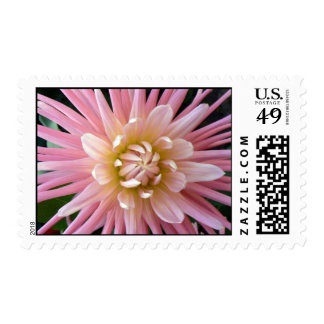 Pretty in Pink Floral Postage Stamp