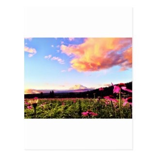 pretty in pink post card