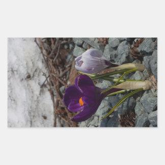 Pretty in Purple Rectangular Sticker