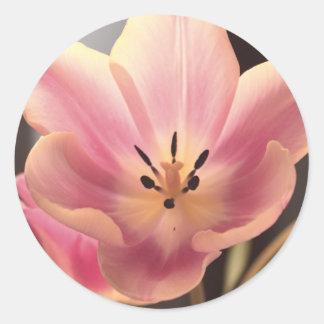 Pretty in Purple Tulip Sticker