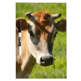 Pretty Jersey Cow Stare Dry-Erase Board