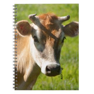 Pretty Jersey Cow Stare Notebook