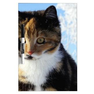 Pretty kitten in frost Dry-Erase board