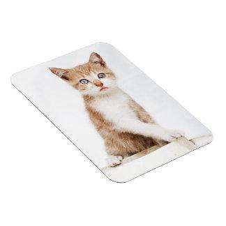 pretty kitten magnet