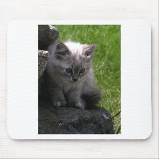 Pretty Kitten Mouse Pad