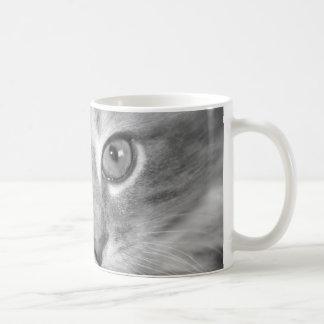 pretty kitten mug