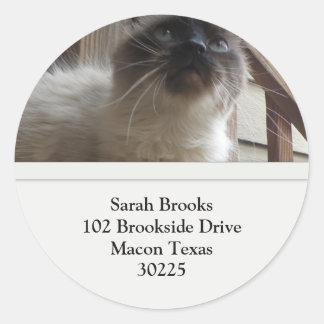 Pretty Kitty Address Labels