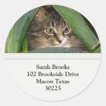 Pretty Kitty Address Labels Round Stickers