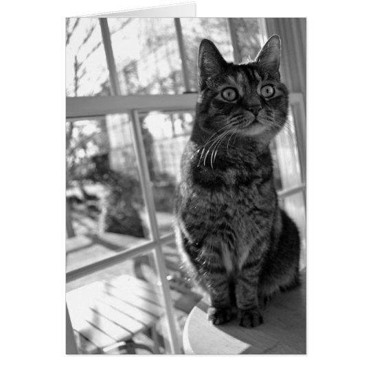 Pretty Kitty Bright Eyes Notecard