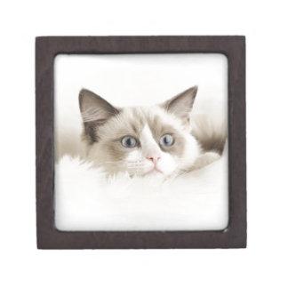 Pretty Kitty Jewelry Box