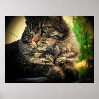 Pretty Kitty pose by djoneill Posters