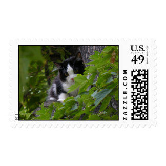 Pretty Kitty Postage Stamps