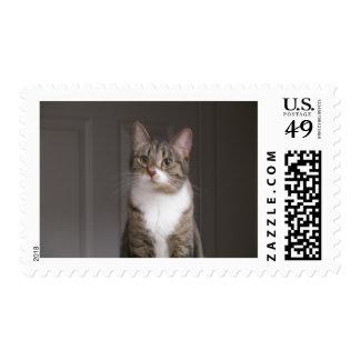 Pretty Kitty Postage