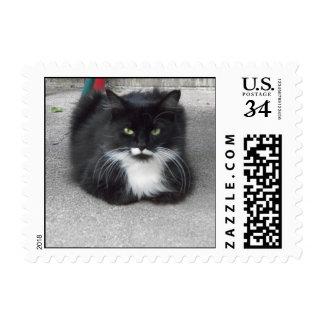 Pretty Kitty Postage Stamp