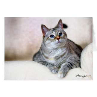 Pretty Kitty, Zilla Card